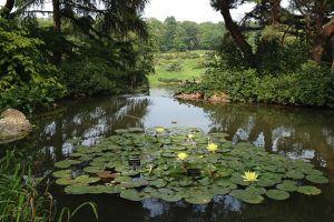botanic_garden_pond.jpg