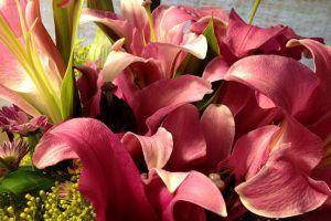 caitlin_erin_flowers.jpg