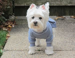 holly_blue_sweater.jpg