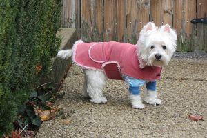 holly_pink_jacket.jpg