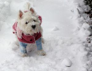 holly_snowface.jpg