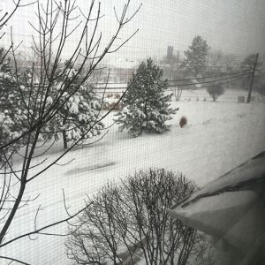 jenna_winter_scene.jpg